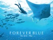 「Wii」発売10周年!名作『FOREVER BLUE』に思いを馳せる 画像