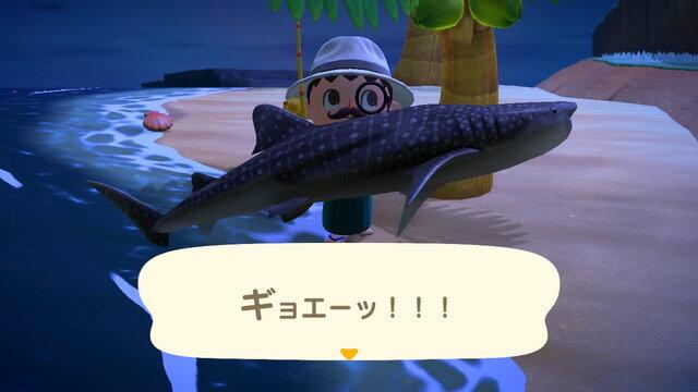 あつ森 6月で終わる魚