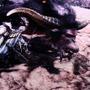 【TGS2019】さらに凶暴になった「金獅子ラージャン」に挑め! 『モンハンワールド:アイスボーン』ステージレポ―ト