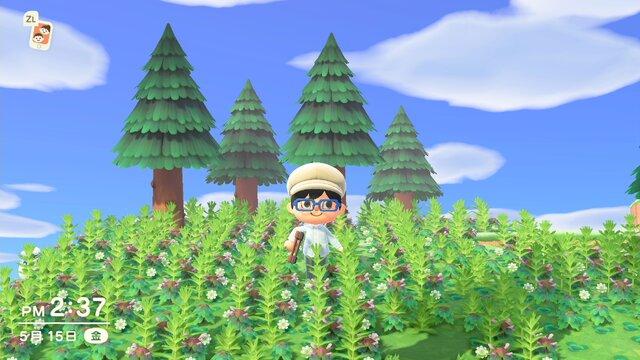 あつ 森 綺麗 な 島