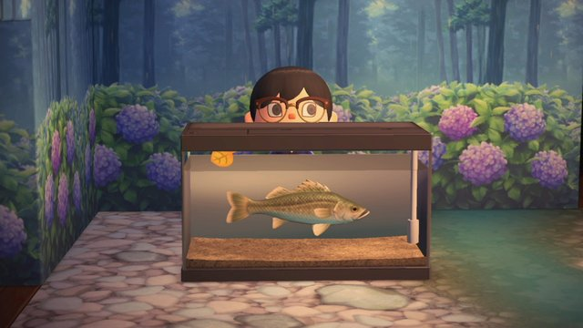 とびだせ どうぶつ の 森 レア 魚