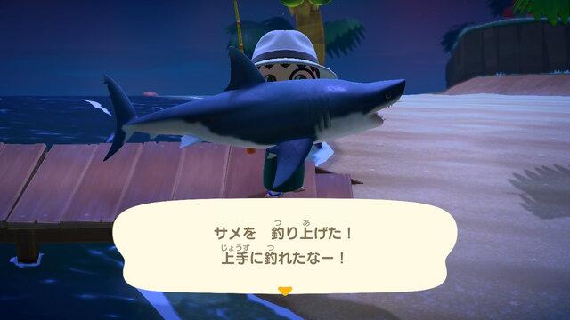 あつ 森 サメ 出現 時間