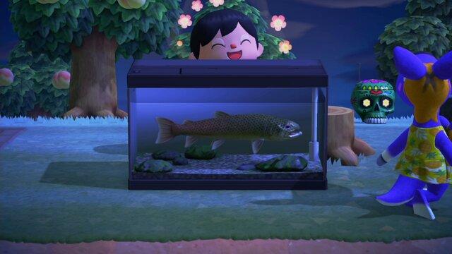 あつ森 滝 魚